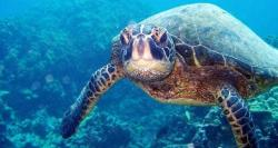 Member Feature: Cayman Turtle Centre