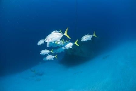 Dive 365: Russian Wreck #356/ Cpt. Keith Tibbetts