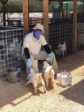 Bluff Farms