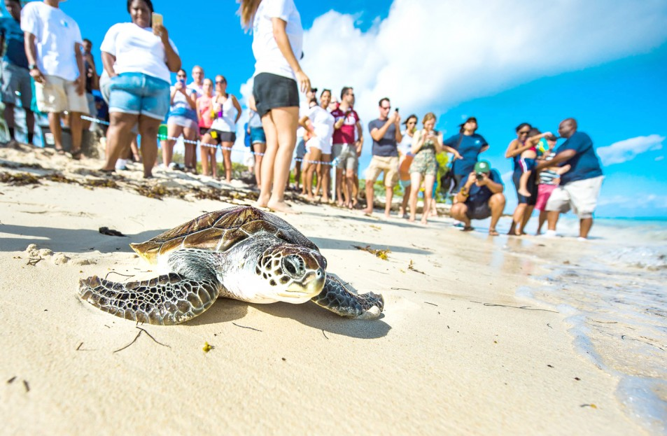 Turtle farm credited for revival of species