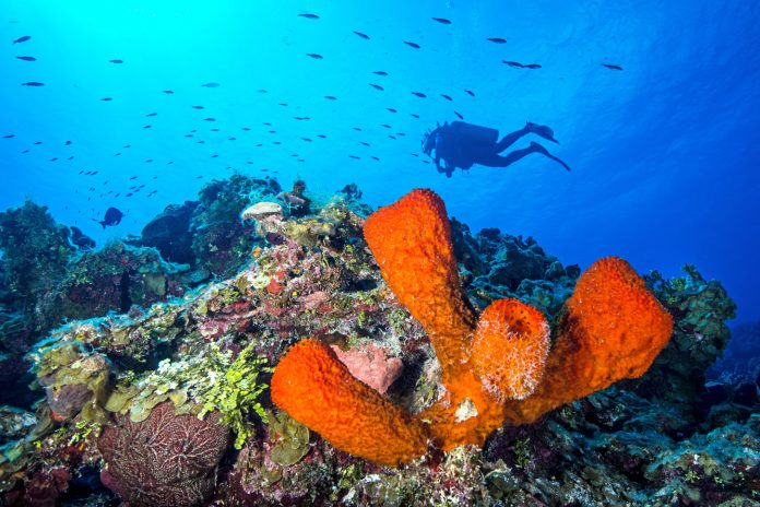 Cayman may be spot of hope in coral survival