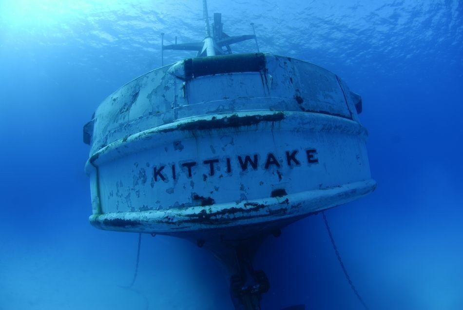 Diving Kittiwake Cayman