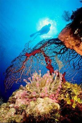 Deep Blue Divers