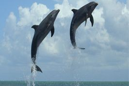 Dolphin Cove (Cayman) Limited