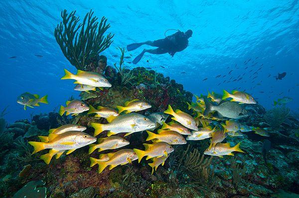 Reef Divers Ltd.