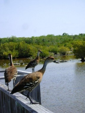 Pond, Little Cayman