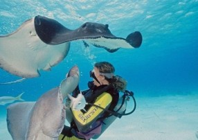 Diving with Stingrays