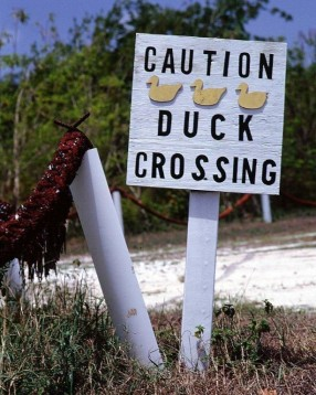 Duck Crossing Sign, Little Cayman
