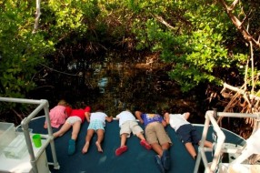 Sea Elements kids mangrove education